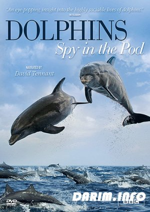 Дельфины: Шпион в стае / Dolphins: Spy in the Pod (2014) HDTVRip / HDTV 720