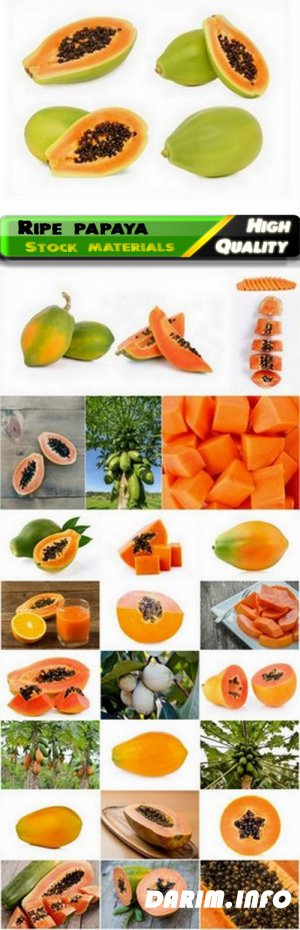 Fruits of ripe papaya are whole and cut 25 HQ Jpg