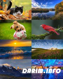 Wallpapers Mix №781